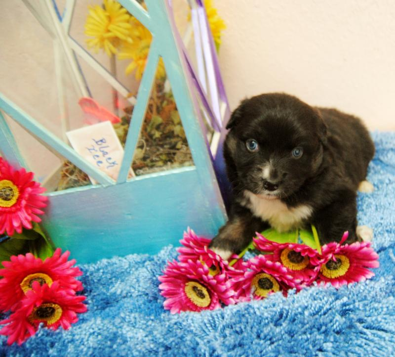 How to potty train a 7 week old yorkie size