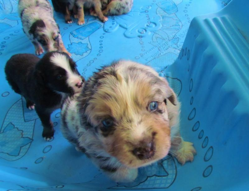All puppies from this litter have their new forever families born on 2